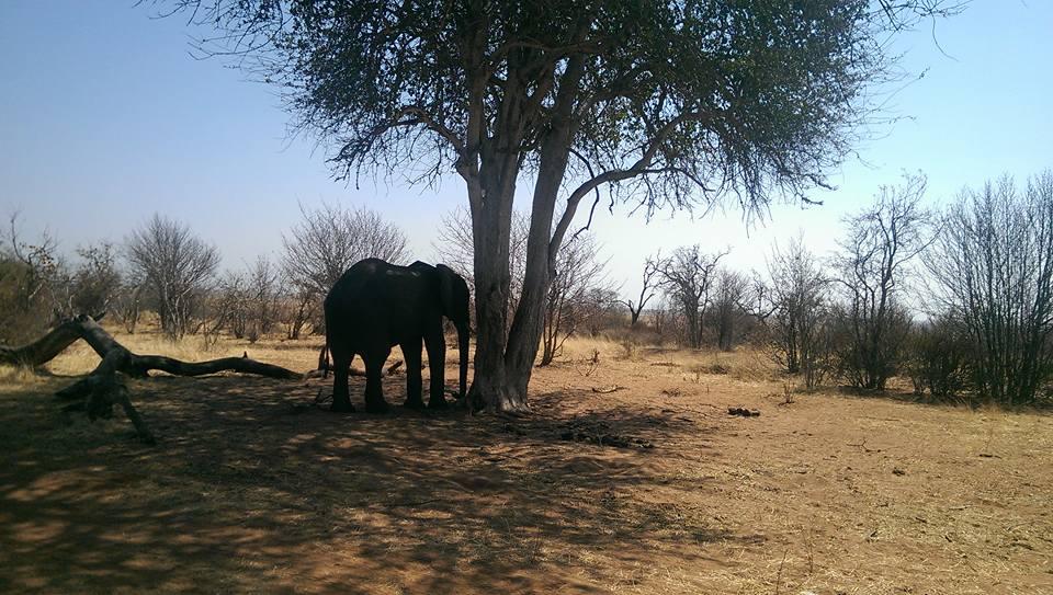Zambia Outreach Project
